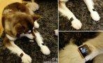 Hijo de magnate chino le compró 2 Apple Watch de oro a su perro