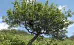 Especies amenazadas de flora silvestre: elaborarán nueva lista