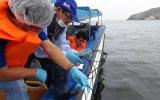 Áncash: evalúan estado de calidad de agua en mar chimbotano