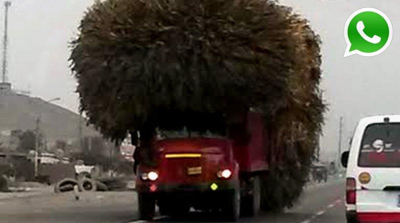 """Vehículos conocidos como """"pelucones"""" siguen transitando por la Panamericana Norte, pese a que pueden ocasionar accidente. (Foto: WhatsApp/El Comercio)"""