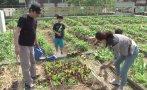 Corea del Sur: jardines invaden las azoteas de Seúl [VIDEO]