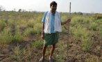 ¿Por qué se suicidan tantos granjeros en la India?