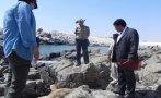 Por matar a lobo marino: cárcel suspendida y pago de S/. 1.000