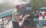 China destruye media tonelada de marfil de contrabando [VIDEO]