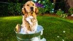 Ayuda al medio ambiente mientras cuidas a tu mascota - Noticias de botellas recicladas