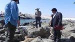 Por matar a lobo marino: cárcel suspendida y pago de S/. 1.000 - Noticias de lobos marinos