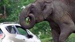 YouTube: elefante roba bolsa de alimentos a turistas - Noticias de fotografía