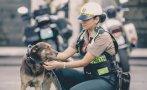 """Escuadrón """"Orejitas"""" de la Policía rescata animales de la calle"""