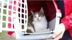 ¿Por qué los gatos padecen menos estrés si están en una caja? - Noticias de bbc focus