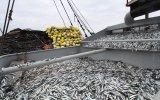 Pesqueros: primera temporada de anchoveta superará la del 2015