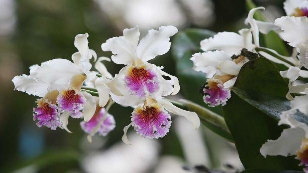 Más de 1.000 especies de flora estarían en peligro de extinción