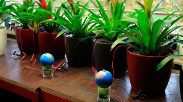 Científicos desarrollan plantas que producen electricidad  Inventos