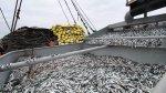 Adex: Exportación pesquera se vio afectada por el clima - Noticias de industria extractiva