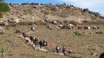 Valle del Colca: caminos de herradura tendrán mantenimiento - Noticias de provincia de caylloma