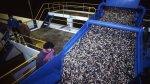 ¿El sector acuícola todavía necesita incentivos tributarios? - Noticias de humberto speziani