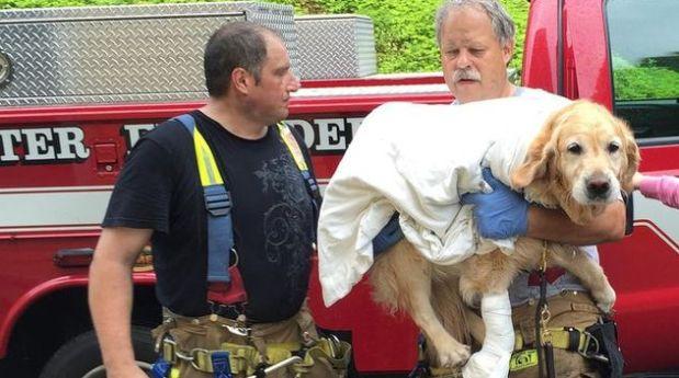 Perro que salvó la vida a su dueña invidente. (Foto: Internet)