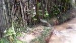 Loreto: denuncian que alimentan a caimanes con gatos - Noticias de caimanes