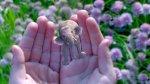 Las diez tecnologías más innovadoras creadas el 2015 - Noticias de pedro moneo