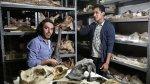 """""""El paleontólogo halla evidencia de evolución en cada resto"""" - Noticias de bagua grande"""