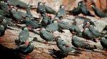 Consejos para viajar a zonas de conservación ambiental - Noticias de alto las hormigas