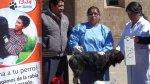 Puno: más de 220 mil perros serán vacunados contra la rabia - Noticias de defunciones