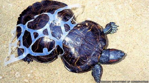 El increible caso de la tortuga