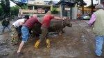 La increíble fuga de animales de un zoológico tras inundaciones - Noticias de inundaciones