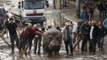 Georgia: Inundación causa la fuga de fieras y deja 12 muertos - Noticias de inundaciones