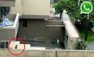 WhatsApp: mantienen vicuña dentro de una casa en San Isidro