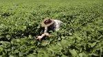 Precio internacional de alimentos cayó 1,9% en enero - Noticias de fenómeno climático la niña