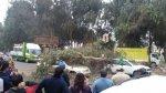 Árbol cayó sobre vehículo en movimiento en Ate [FOTOS] - Noticias de caida de arbol
