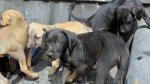 Once perritos rescatados en Barranco serán puestos en adopción - Noticias de mariano melgar