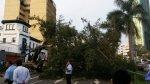 Árbol cae sobre autos y causa congestión en Av. Javier Prado - Noticias de street view