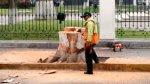 Municipalidad de Lima retiró siete árboles de la Plaza Bolívar - Noticias de caida de arbol