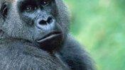 Escapan 30 monos infectados con virus en Puerto Rico