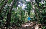 Reforestan bosque arrasado por la tala y siembra ilegal de coca