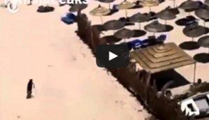 Túnez: Así actuó terrorista tras matar a 38 turistas [VIDEO]