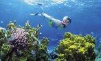ONU podría declarar en peligro la Gran Barrera de Coral