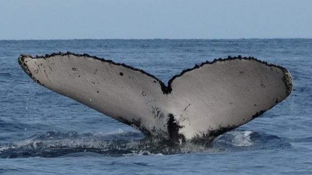 (Foto: Cortesía Pacífico Adventures)