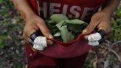 Cuando la vida en el Vraem depende de la coca [FOTOS]