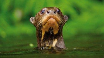 Áreas Naturales Protegidas: conoce más de ellas con estas fotos