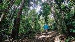 Reforestan bosque arrasado por la tala y siembra ilegal de coca - Noticias de pastas