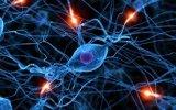 Hallan neuronas responsables de la creación rápida de recuerdos