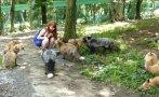 Explora la aldea de los zorros en Japón [VIDEO]