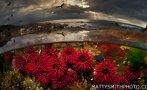 Espectaculares imágenes divididas por la superficie del agua