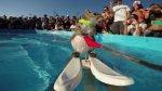 Ardilla esquía sobre agua y es 'MVP' de los X Games [VIDEO] - Noticias de twiggy