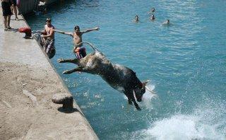 Al agua toros: descubre el festival de Bous a la Mar en España