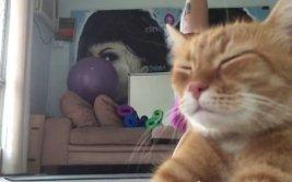 """¿Cómo un gato """"arrogante"""" logró ser un éxito viral? [VIDEO]"""
