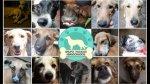 Albergue de perros es criticado por impedir la adopción a gays - Noticias de frecuencia latina reportaje de tallarines de casa doña mica