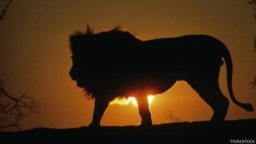 Los leones nos siguen cautivando pero al que más apreciábamos lo matamos.